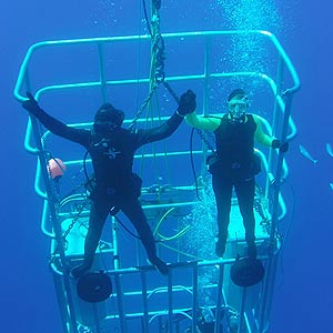 Two divers holding hands while inside a shark cage