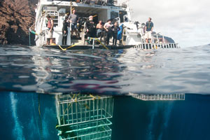 The Nautilus Explorer dropping cages into the water near Guadalupe Island