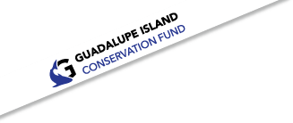 Guadalupe Island conservation banner