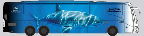 Shredder, the fastest way to Guadalupe Island Great White Sharks